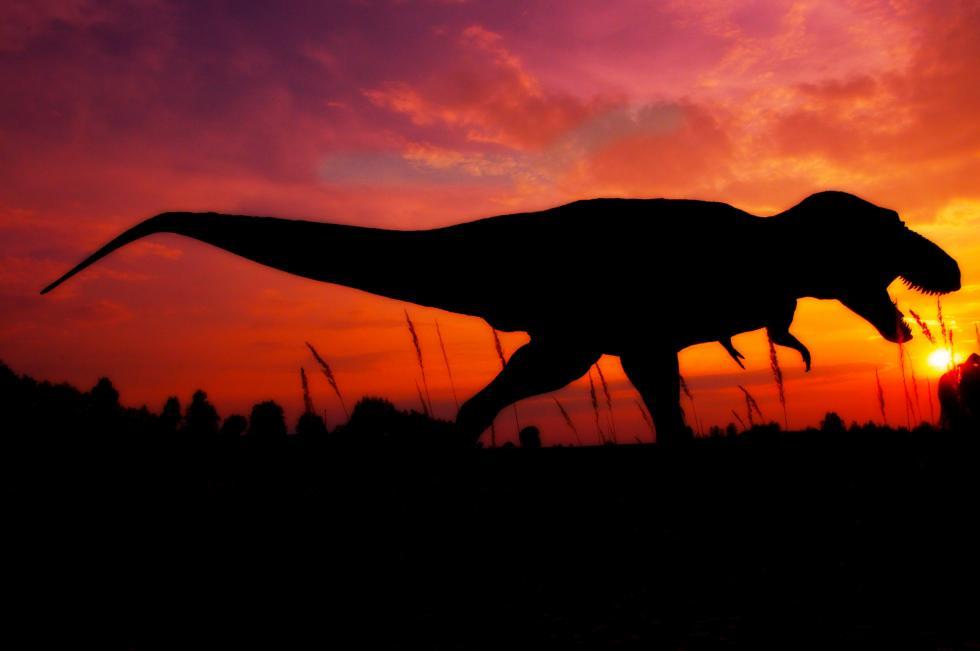 Nocne tajemnice dinozaurów