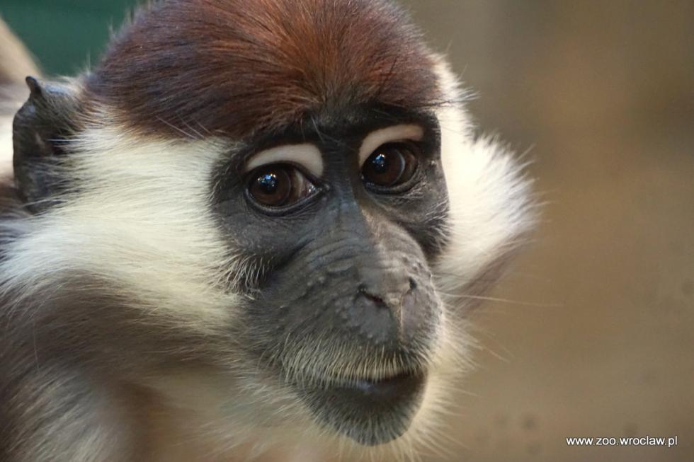 Dzień dobry wDniu Małpy!